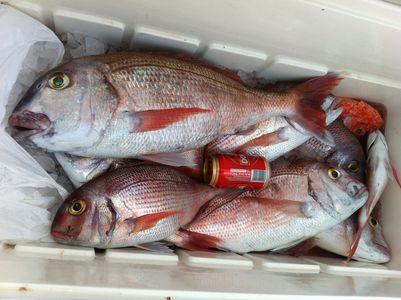 Pesca en  La Graciosa 2012 Pargos